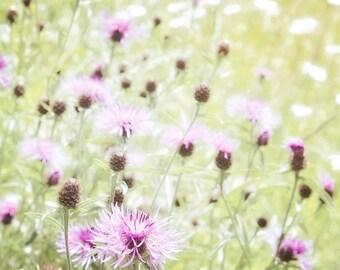 Nature Photography, Wild flowers, Meadow, Summer, Fine Art print, Home Decor.