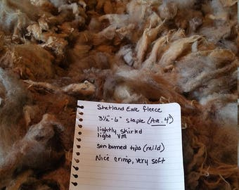 Raw Shetland fleece