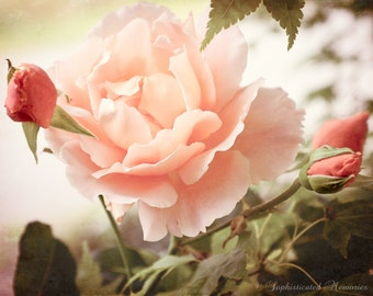 Botanical Art - Just Joey Rose Photo - Romantic Bedroom Art - 11x14, 16x20 Photo Print - Peach Flowers - Summer Florals - Rose Photography