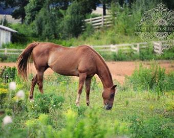 Serene horse grazing in her field