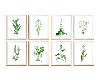 Kitchen Wall Art set of 8,  kitchen herbs printable, printable kitchen prints, kitchen decor, instant download, gallery wall, herbs poster