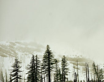 Trees in a Snowy Mountain Pass