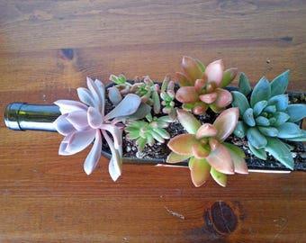 Glass Succulent Planter / Wine Bottle Planter / Garden / Wine Gifts / House Warming / Windowsill Planter / Indoor Plants / Valentines gift