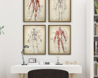ANATOMY PRINT SET of Four Anatomy Charts, Anatomy Poster, Scientific Illustration, Anatomical Drawing, Anatomy Print, Medical Art, Doctor