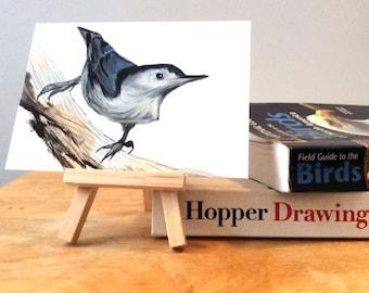 White Breasted Nuthatch Print, Wildlife Illustration, Digital Bird Drawing, Postcard Art  NUT