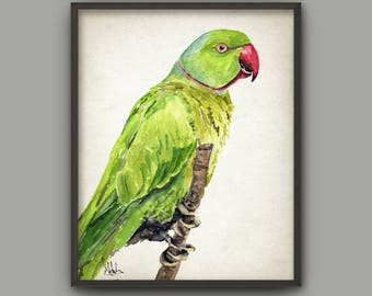 Parrot Watercolor Wall Art Print, Rose-Ringed Parakeet Bird Painting, Tropical Birds Home Decor,Amazon Rainforest Jungle Animal Nursery B718