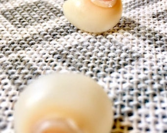 Spiral Shell Stud Earrings
