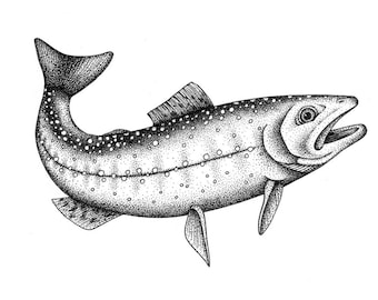 Brook Trout Orignal Drawing