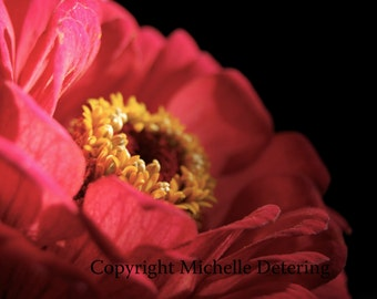 Red Flower - Zinnia Photography- Flower Photography, Flower Art, Flower Wall Decor, Flower Print, Red Flower art, Flower Decor, Flower Photo