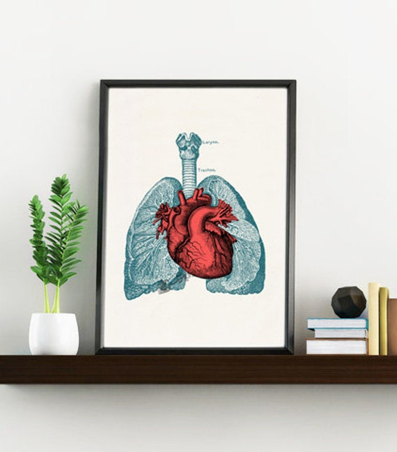 Doctors gift- Heart and Lungs Human Anatomy print- Science students gift- Medical prints wall art  SKA030WA4