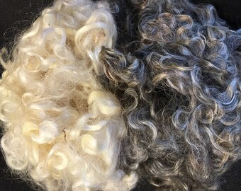 Wensleydale locks Wool for spinning, washed and picked, spinning fiber, roving 1 oz colored and white,