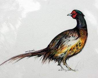 common pheasant, wildlife art, original pen and watercolor painting