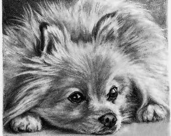 Custom Pet Portrait Dog Portrait Hand Sketched Drawing Working from Your Photos