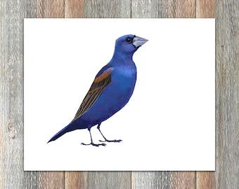 Blue Grosbeak Bird Print