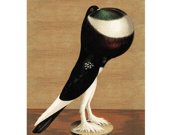 Pigeon 2 Vintage Style Art Print Bird Brown Green White