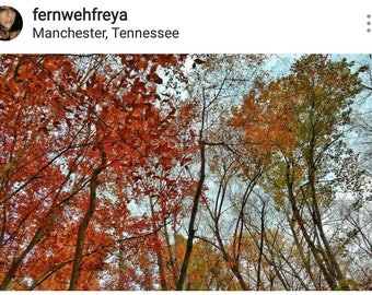Framed 8 x 10 Photo Print- Autumn Trees in Manchester, Tennessee