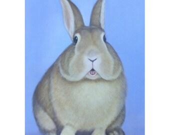Rabbit Magnet -  Rabbit Magnet -  Funny Rabbit Art - Proceeds Benefit Animal Charity