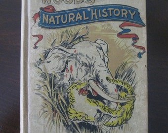 1901 Woods Natural History - Illustrated for Young People - DeWolfe Fiske and Co