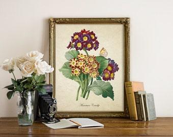 Flower Botanical Print, Mountain Cowslip Print, Flower Print, Home Decor. Natural History, Mountain Cowslip Botanical Art Reproduction FL106