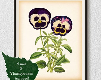 Pansy, Antique print, Botanical print, Antique flower print, Flower art, Floral print vintage, Botanical printable art, Illustration, Art #5