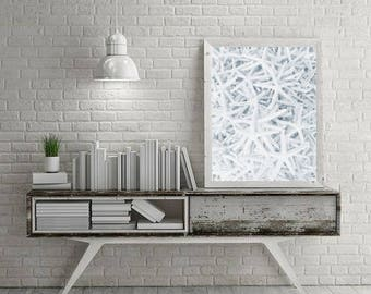 Seashell Print, Nautical Decor, Coastal Prints Seashell Poster Printable Wall Art Prints, Bathroom Wall Decor, Seashell Photo Download