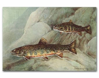 "Trout Fishing Print, Fly Fishing Art (Lake House Decor, Vintage Fish Art) --- ""Brook Trout"" No. 129"