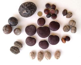 Drift Seed / Sea Bean Assortment, 31 Pieces