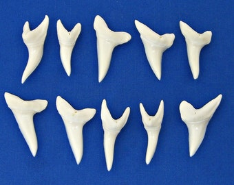 "10 Pc 1.5"" MAKO Sharks Teeth 1-1/2 Inch 38mm Genuine White Shark Jaw Tooth FREE S&H"