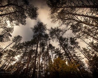 Look up! | Photo print | Limited edition of 23 | 30 x 20 cm or 45 x 30 cm