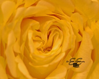 Yellow Flower - Macro