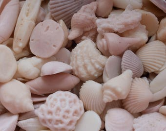 100 MINI Sea Shell Soaps