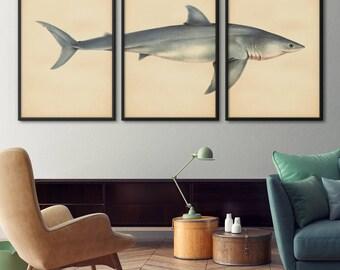 Shark Print Set of 3, Shark Art, Great White Shark Print, Shark Art, Large Print Set, Print Set, Nautical Decor, Coastal Decor