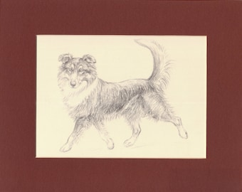 """Collie Vintage Dog Print K. F. Barker 1933 Drawing Print Mounted with Mat """"Roy the Ranger"""" & Terriers on Reverse Terrier Print Collie Print"""