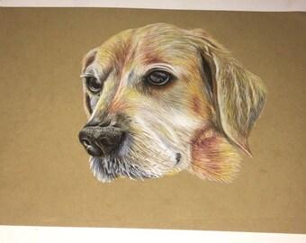Custom pet portrait, colour pencil hand drawn - dog