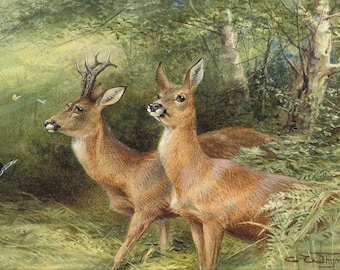 Roebuck - Counted cross stitch pattern in PDF format
