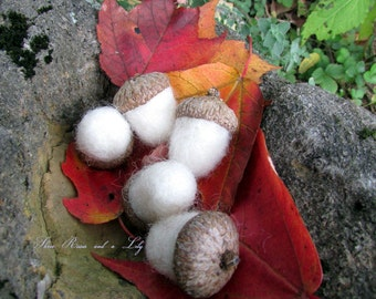 White Needle Felted Acorns, Set of 5