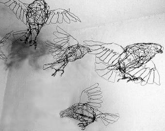 Flock of Pigeons-5 birds