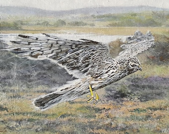 Hen Harrier, wildlife canvas print, fine art print from original painting, bird of prey, wildlife art, Hen Harrier painting, RSPB Arne