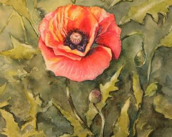 Poppies Single ORIGINAL watercolor painting Christy Sheeler Artist orange red poppy garden bloom summer floral flowers nature artwork