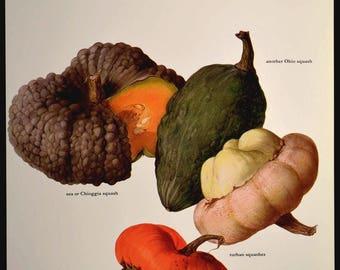 Garden Wall Art Squash Print Kitchen Wall Decor Vegetables