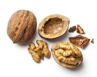 Parrot Food Bag Of Walnuts in the Shell 1 LB