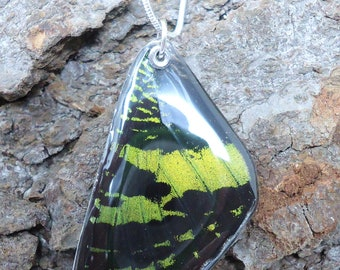 Madagascan Sunset Moth Resin Wing Necklace (forewing)