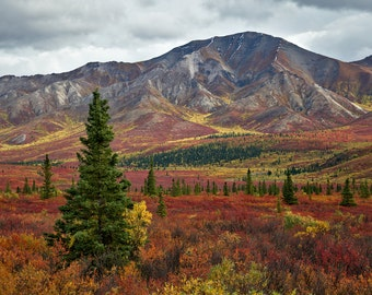 Autumn in Denali National Park - Signed Lustre Print