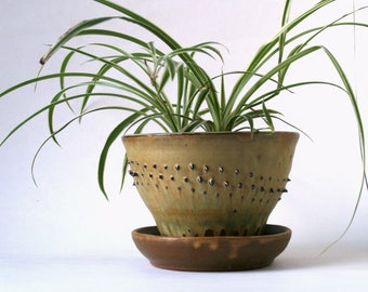 Spiked Planter  - Contemporary Pot with attached Drainage Plate