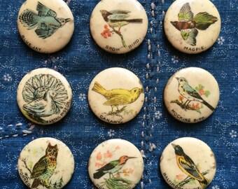 antique 1890s Whitehead & Hoag celluloid pinback | pick your favorite bird