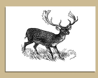 SALE - Set of 10 Buck Notecards With Envelopes - 5 x 7 inches - Greeting Cards - Fathers Day Gift - Gift for Hunter - Gift for Him