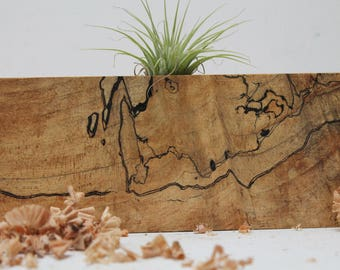 Reclaimed Spalted Maple Air Plant Holder M01
