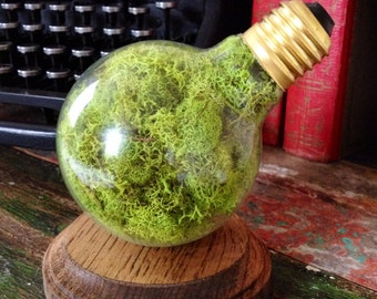ON SALE, Moss Terrarium, repurposed lightbulb, jewelry box, antique, recycled, upcycled, steampunk, Harry Potter, Hunger Games, twilight