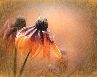 Fall Flower Digital Art Print, Enhanced Photo, Fine Art Photography, Giclee Print