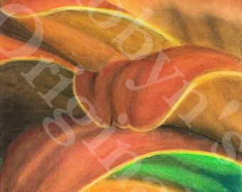 Orange and Red Petals Art Print